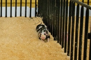 Swine Facility